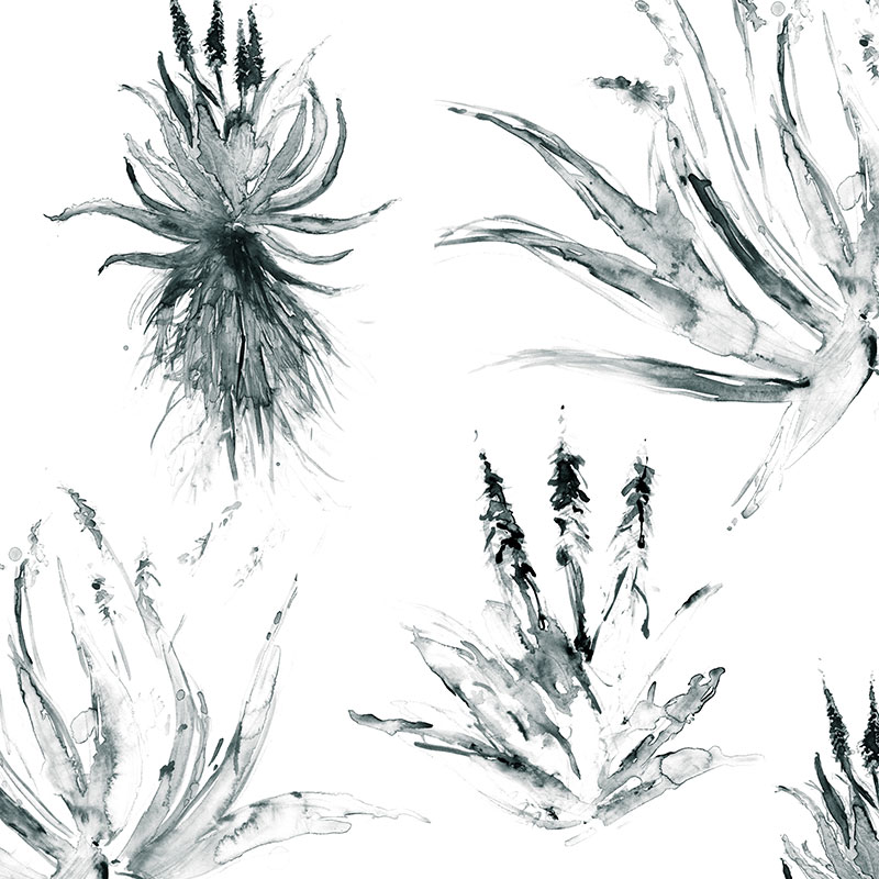 Aloes in Monochrome